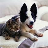 Милениците и хигиената во вашиот дом